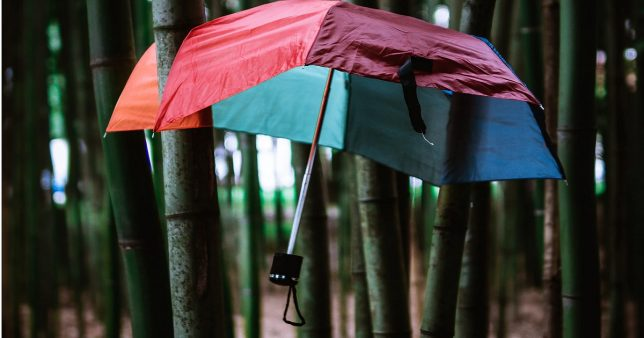 image of an umbrella caught in bamboo trees representative of the limitations associated with super top up insurance policies